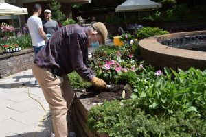 senior man digging in the garden